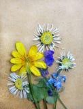 Fundo do vintage com as plantas secas do herbário Fotos de Stock