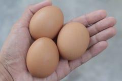 fundo do vintage dos ovos da galinha e dos ovos do pato Fotos de Stock