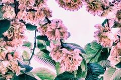Fundo do vintage, quadro de ramos de florescência da coroa natural imagens de stock royalty free
