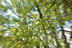 Fundo do zumbido da árvore fotos de stock royalty free