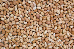 Fundo dos amendoins Foto de Stock
