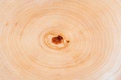 Fundo dos anéis de árvore imagens de stock royalty free
