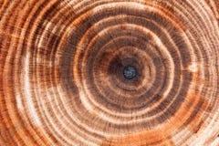 Fundo dos anéis de árvore imagem de stock