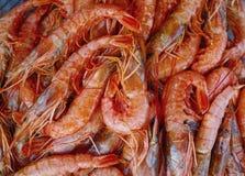 Fundo dos camarões do Mar Vermelho Imagens de Stock Royalty Free