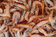 Fundo dos camarões do Mar Vermelho Fotografia de Stock