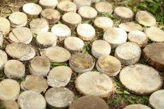 Fundo dos cotoes de árvore A textura original de uma madeira redonda bonita Imagem de Stock Royalty Free