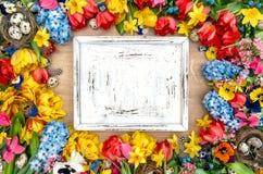 Fundo dos feriados com flores, ovos da páscoa e de madeira da mola Fotografia de Stock