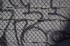 Fundo dos grafittis e da ligação Chain Foto de Stock