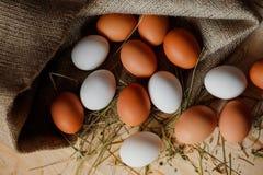 Fundo dos ovos Imagem de Stock