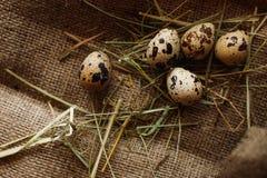 Fundo dos ovos Fotos de Stock