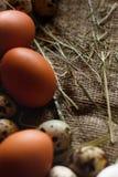 Fundo dos ovos Fotos de Stock Royalty Free