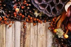 Fundo dos pêsames, flores artificiais e plantas do outono Fotos de Stock