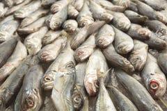 Fundo dos peixes do Scad Fotos de Stock Royalty Free