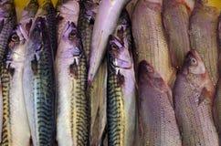 Fundo dos peixes frescos Imagem de Stock Royalty Free