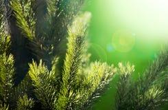 Fundo dos ramos do close-up novo das árvores no canteiro de flores em s Imagem de Stock