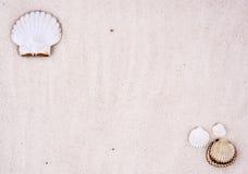 Fundo dos Seashells imagem de stock