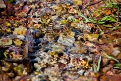 Fundo dos seixos vistos através da água rippling Imagem de Stock Royalty Free