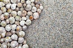 Fundo dos shell Foto de Stock