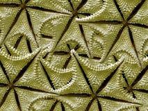 Fundo dos Starfish Fotografia de Stock