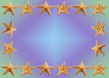Fundo dos Starfish Foto de Stock