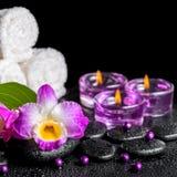 Fundo dos termas do dendrobium roxo da orquídea, folha verde com gota Imagens de Stock Royalty Free