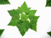 Fundo dos testes padrões das folhas Foto de Stock Royalty Free
