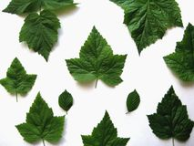 Fundo dos testes padrões das folhas Fotografia de Stock