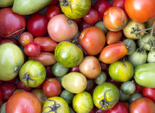 Fundo dos tomates Imagens de Stock Royalty Free