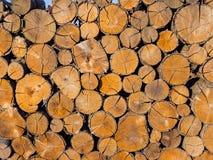 Fundo dos troncos de árvore Fotos de Stock Royalty Free