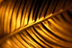 Fundo dourado da folha fotos de stock