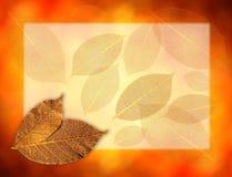 Fundo dourado das folhas Imagem de Stock