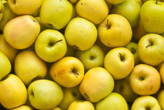 Fundo dourado das maçãs Foto de Stock