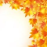 Fundo dourado do outono com queda da folha Imagem de Stock Royalty Free