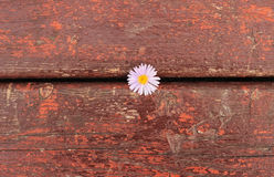 Fundo e flor vermelhos de madeira Fotografia de Stock