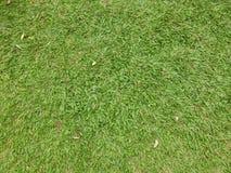 fundo e papel de parede da grama verde Fotos de Stock Royalty Free