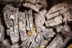 Fundo e textura do carvão vegetal no foco obscuro Imagem de Stock Royalty Free