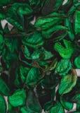 Fundo e textura secados da flor fotografia de stock royalty free