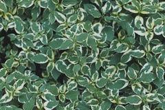 Fundo e textura verdes da folha imagem de stock royalty free