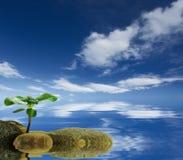 Fundo ecológico conceptual abstrato Fotografia de Stock Royalty Free