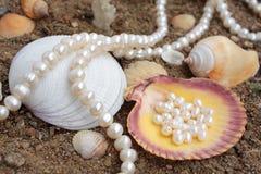 Fundo elegante com pérolas e cockleshell do mar Imagens de Stock Royalty Free