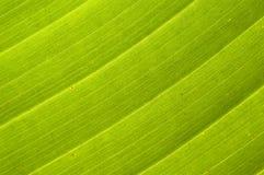 Fundo em folha de palmeira Fotos de Stock Royalty Free