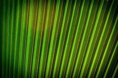 Fundo em folha de palmeira Fotografia de Stock