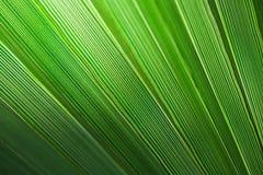 Fundo em folha de palmeira Fotos de Stock