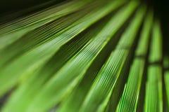 Fundo em folha de palmeira Imagens de Stock