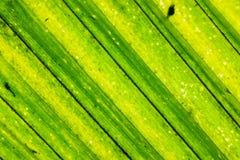Fundo em folha de palmeira Imagem de Stock Royalty Free