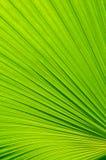 Fundo em folha de palmeira Foto de Stock Royalty Free