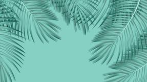 Fundo em folha de palmeira bonito Ilustração do vetor Imagens de Stock