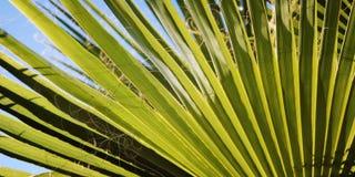 Fundo em folha de palmeira Quando o sol brilhar completamente fotos de stock