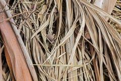 Fundo em folha de palmeira seco Fotografia de Stock
