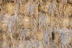 Fundo empilhado da palha amarelo seco Fotografia de Stock